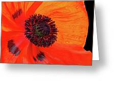 Poppy With Raindrops 2 Greeting Card