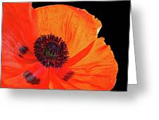 Poppy With Raindrops 3 Greeting Card