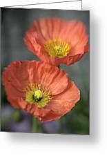 Poppys Greeting Card by Barry Culling
