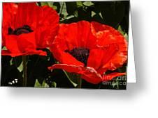 Poppys Greeting Card