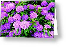Pops Of Purple Greeting Card