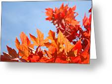 Popular Autumn Art Red Orange Fall Tree Nature Baslee Troutman Greeting Card