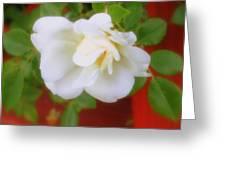 Porch Rose Greeting Card