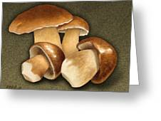 Porcini Mushrooms Greeting Card by Marshall Robinson