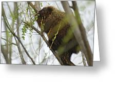 Porcupine Eating Leaves Greeting Card