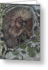Porcupine In Aspen Greeting Card