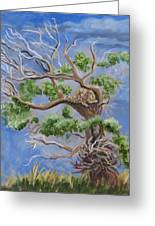Porcupine In Cottonwood Greeting Card