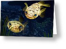 Porcupine Puffer  Greeting Card