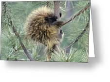 Porcupine Tree Greeting Card