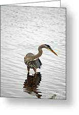 Port Townsend Blue Heron Series Greeting Card