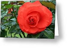 Portland Rose Garden Greeting Card