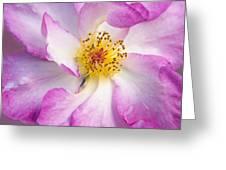 Portland Rose Greeting Card