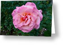 Portland Roses #2 Greeting Card