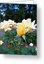 Portland Roses #3 Greeting Card