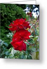 Portland Roses #6 Greeting Card