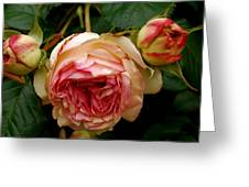 Portland's Rose Garden Greeting Card