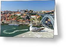 Porto Skyline Seagull Greeting Card