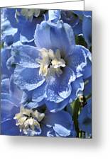 Portrait Blue Delphinium 114 Greeting Card
