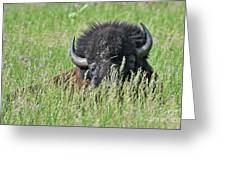 Portrait Of A Bison Greeting Card