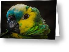 Portrait Of A Blue-fronted Parrot Greeting Card