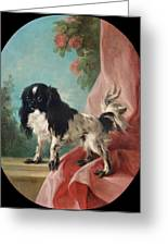 Portrait Of A Cavalier King Charles Spaniel Greeting Card