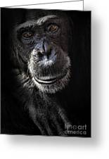 Portrait Of A Chimpanzee Greeting Card