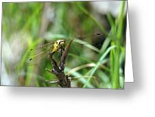 Portrait Of A Dragonfly Greeting Card