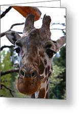 Portrait Of A Giraffe Greeting Card
