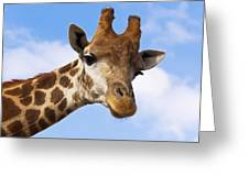 Portrait Of A Giraffe On The Background Of Blue Sky. Greeting Card
