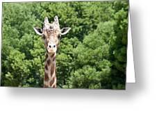 Portrait Of A Giraffe Greeting Card