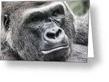 Portrait Of A Gorilla Greeting Card by Jeff Swanson