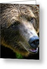Portrait Of A Grizzly Greeting Card