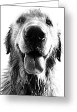 Portrait Of A Happy Dog Greeting Card by Osvaldo Hamer