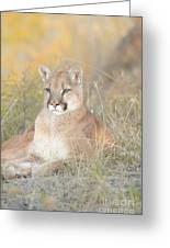 Portrait Of A Mountain Lion Greeting Card