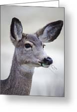 Portrait Of A Mule Deer Greeting Card