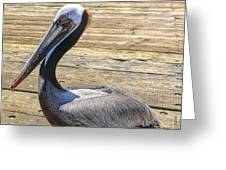 Portrait Of A Pelican Greeting Card