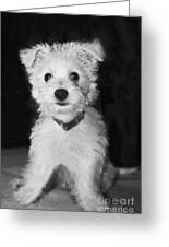 Portrait Of A Puppy In Black And White Greeting Card
