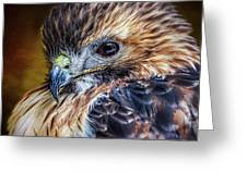 Portrait Of A Red-tailed Hawk Greeting Card