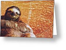 Portrait Of A Sloth Pet Looking In The Camera Greeting Card