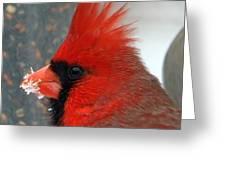 Portrait Of A Snowy Cardinal Greeting Card