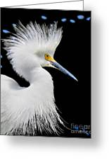 Portrait Of A Snowy White Egret Greeting Card