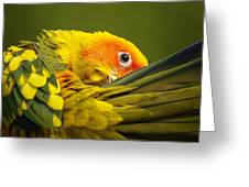 Portrait Of A Sun Conure Greeting Card