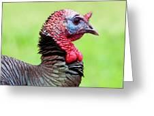 Portrait Of A Tom Turkey Greeting Card