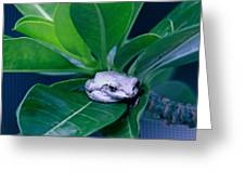 Portrait Of A Tree Frog Greeting Card