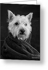 Portrait Of A Westie Dog Greeting Card