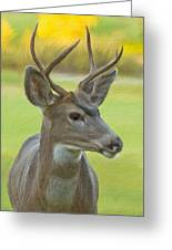 Portrait Of A Young Buck Greeting Card