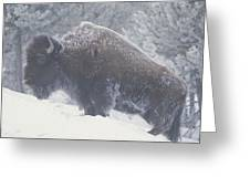 Portrait Of An American Bison Greeting Card
