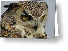 Portrait Of An Owl.  Greeting Card