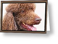 Portrait Of Guinness Greeting Card