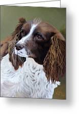 Portrait Of Jesse - Springer Spaniel Greeting Card